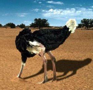 El síndrome del periodismo del avestruz
